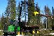 Малый бизнес в лесной отрасли принес казне Поморья свыше 70 миллионов рублей — Экономика — Новости Архангельска