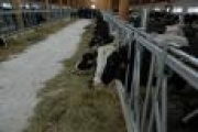 В Архангельской области на одну животноводческую ферму стало больше — Экономика — Новости Архангельска