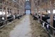 В прошлом году фермеры Архангельской области получили 67 млн рублей господдержки — Экономика — Новости Архангельска
