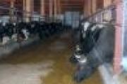 Новую ферму на 250 голов открыли в одном из районов Архангельской области — Экономика — Новости Архангельска